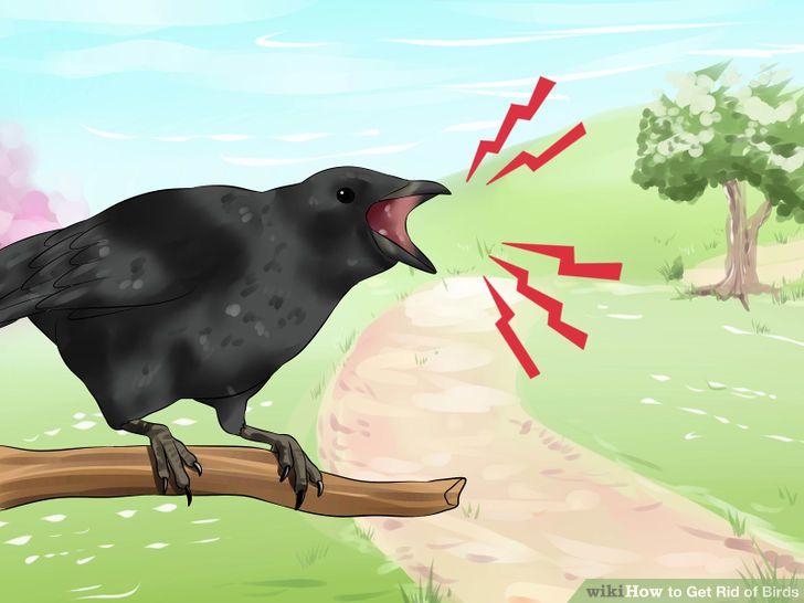 วิธีไล่นกกระจอก นกพิราบ อย่างง่าย ด้วยตัวคุณเอง 4